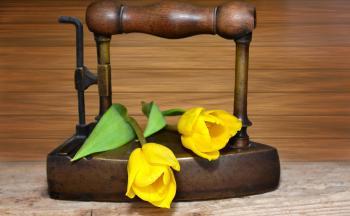 Tulips on the Iron