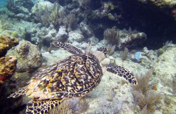 Turtle eye view Molassas Reef Key Largo