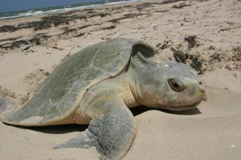 Turtle on the Shore