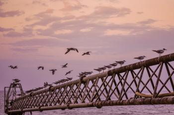 Twilight With Birds