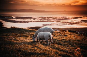 Two Animals on Field during Sunset