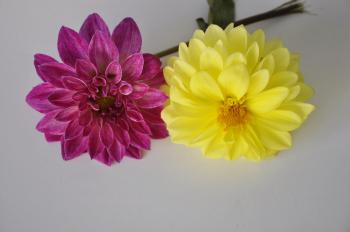 Two Beautiful Flowers