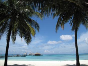 Two Coconut Tree Near Seashore