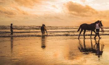 Two Horses on the Beach
