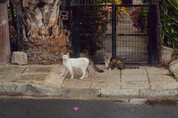 Two Short-fur White and Brown Cats Near Black Metal Gate