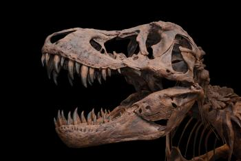 Tyrannosaurus on black background
