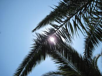 Under the palm tree