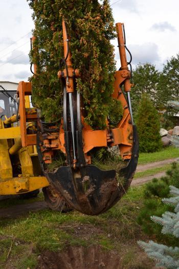 Uplifting the tree