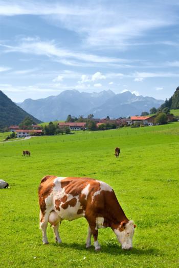 Upper Bavaria