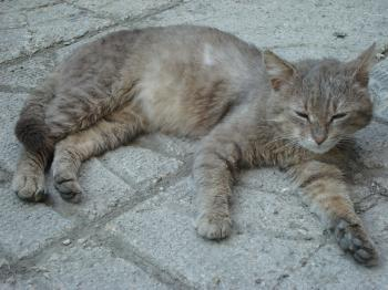 Urban cat resting
