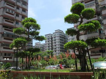 Urban Vegetation