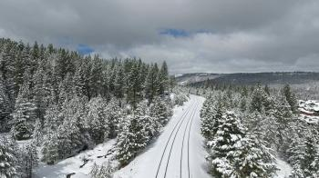 View of Forest Coated with Snow
