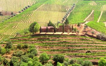 Vineyards Surrounding Old Country Estate - Douro Valley