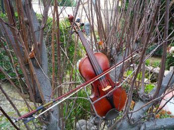 Violin study