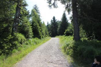 Walking road