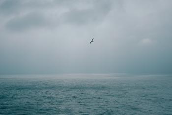 Wandering Bird