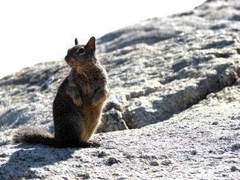 Watching Squirrel