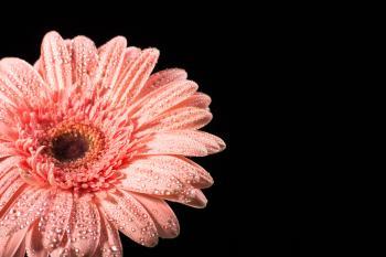water drops on flower petals