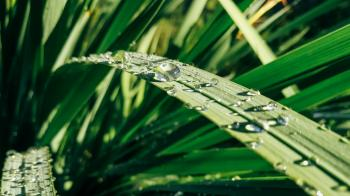 Water Drops on Green Leaf Plants