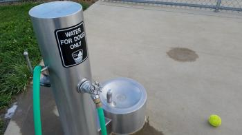 WATER FOR DOGS ONLY
