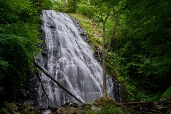 Waterfalls in Between Green Trees