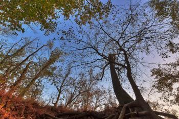 Wayward Twilight Woods - HDR
