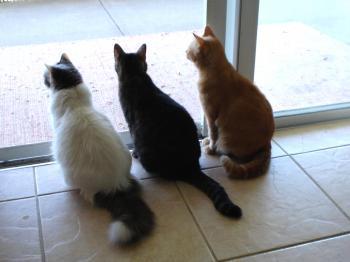 We Three Cats