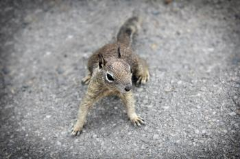 Week 7 (February 15-21) Squirrels