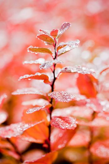 Wet Leaves in Autumn