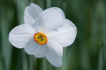 White 6 Petaled Flower