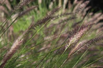 White and Black Grasses in Close-up Photography