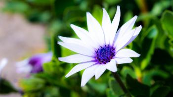 White and Blue Flower