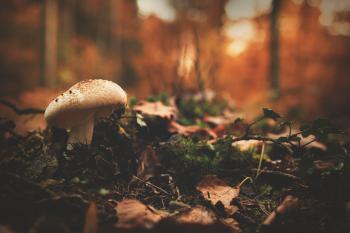 White and Brown Mushroom Beside Green Leaf Plant