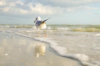 White and Gray Bird Standing on Seaside