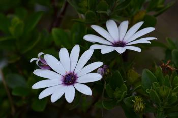 White and Purple Multi Petaled Flower