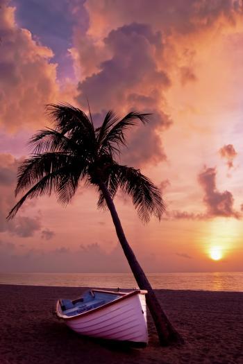 White Boat Beside Tree Under Orange Sky during Sunset