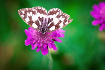 White Brown Butterfly Perched on Purple Flower