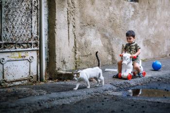 White Brown Short Fur Cat Walking Near Boy in Brown Black Short Sleeve Shirt Riding White Red Toy