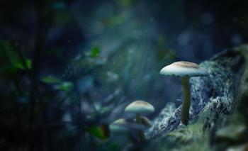 White Mushrooms Digital Wallpaper