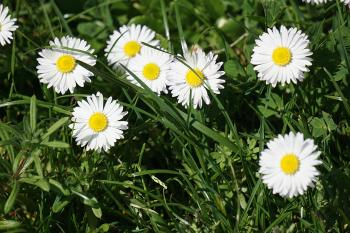 White Petal Flower Field