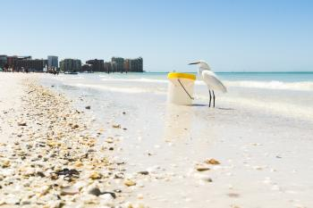 White Seagull on Seashore Beside Plastic Container