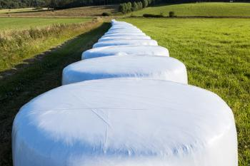 White silage bales in Brastad 10