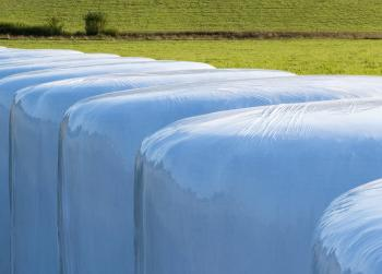 White silage bales in Brastad 12