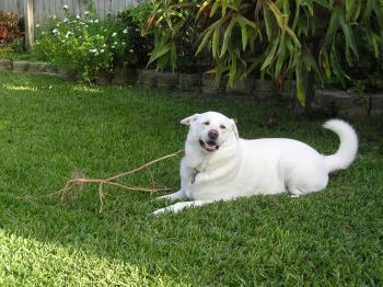 Whitey Dog