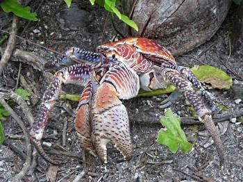 Wild Crab