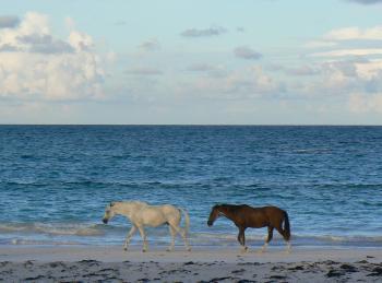Wild Horses on the Shore