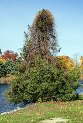 Wild Looking Tree