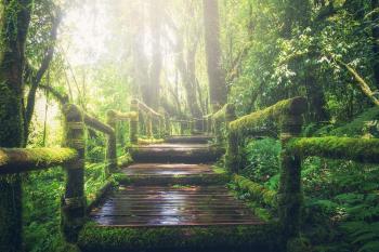 Wild Route