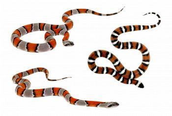 Wild Snakes
