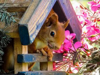 Wild Squirrel